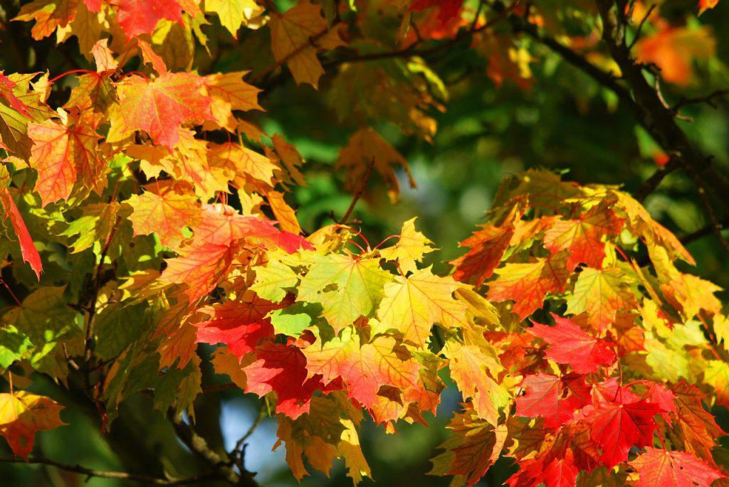 jardin, mantenimiento, cuidar, consejos, profesionales, jobin app, otoño