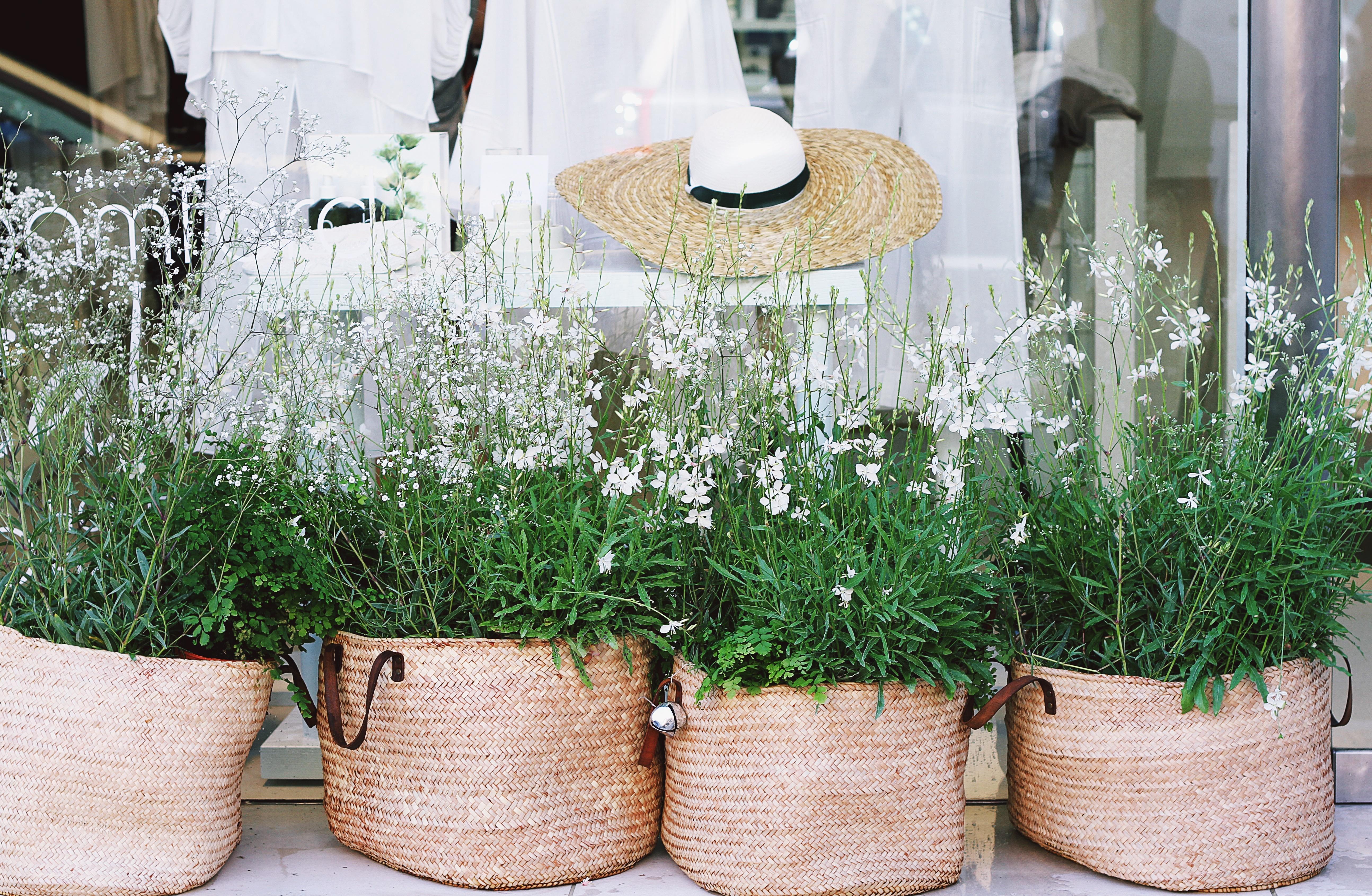 Plantas y reciclar para decorar