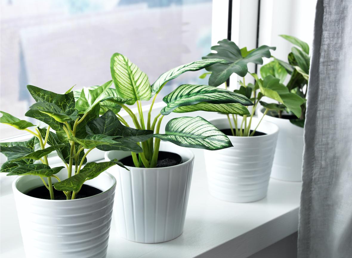 planta Fejka de Ikea para decorar tu hogar