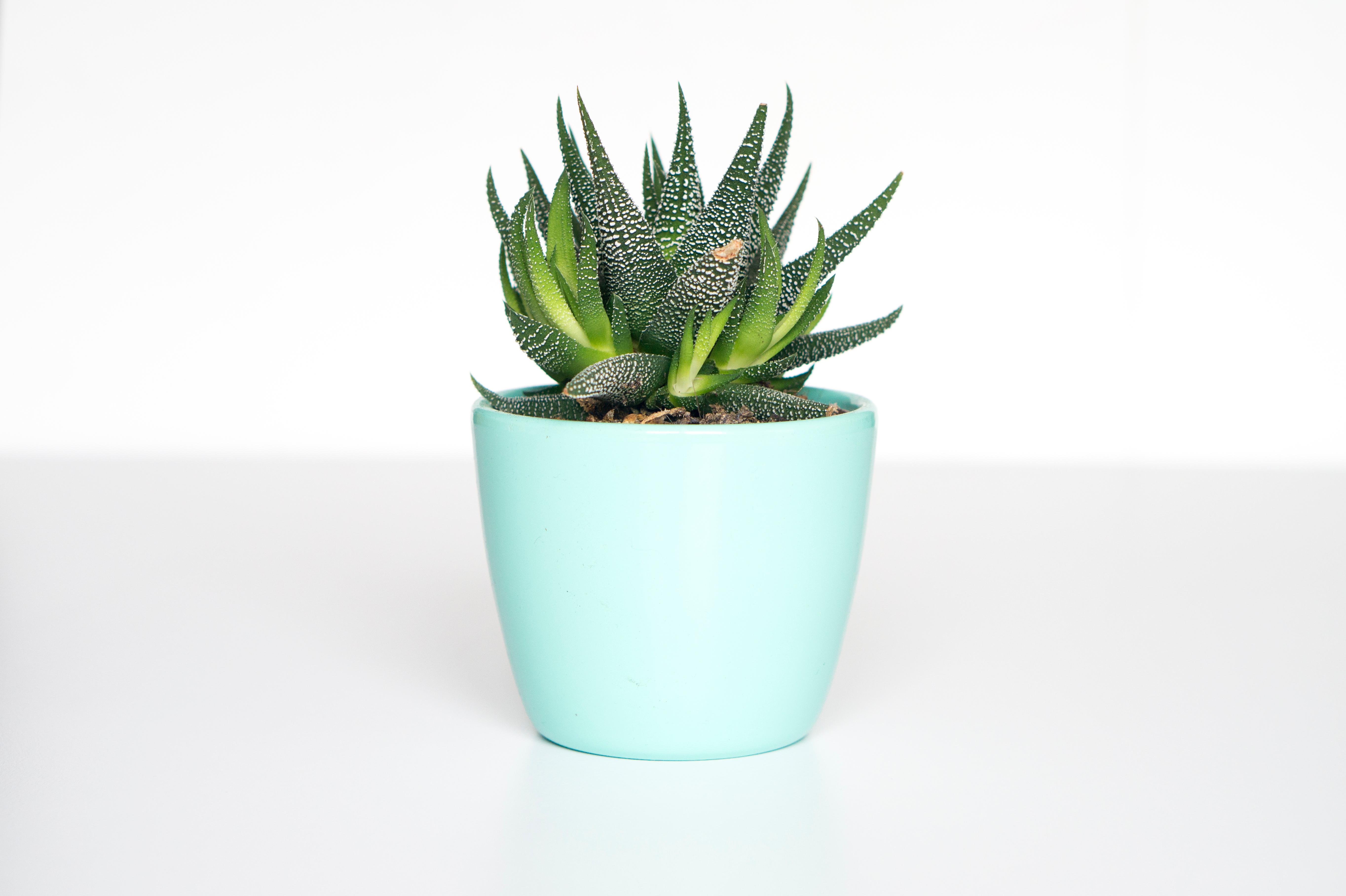 Aloe Vera ayuda a decorar tu hogar