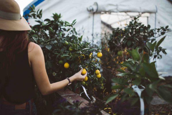 Frutas ecológicas huerto