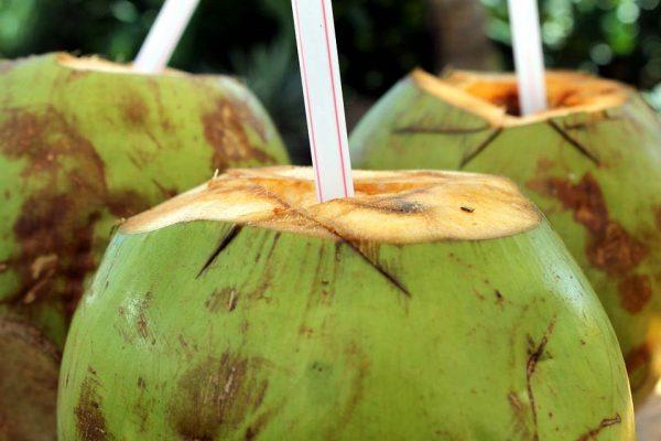 coco estilo tropical