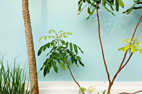 palmeras estilo tropical