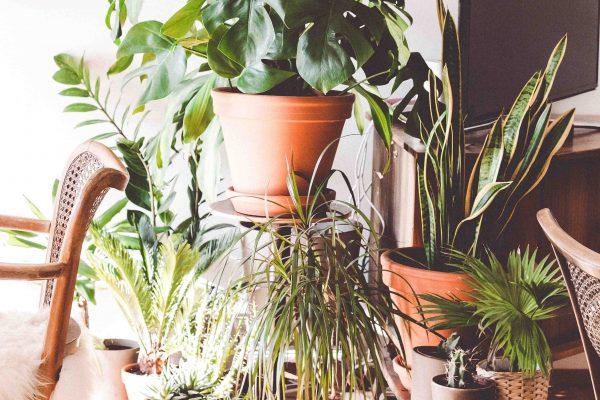 plantas decoración tropical