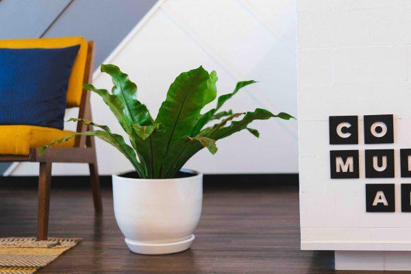 organizar hogar plantas