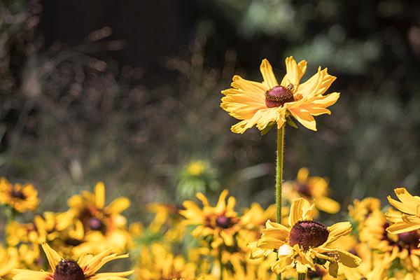plantas jardín invierno