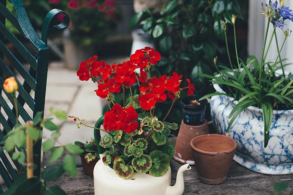 Flores jardin invierno