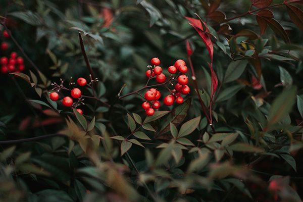 muérdago navidad sostenible