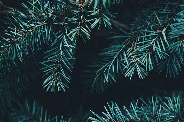 árbol navidad sostenible