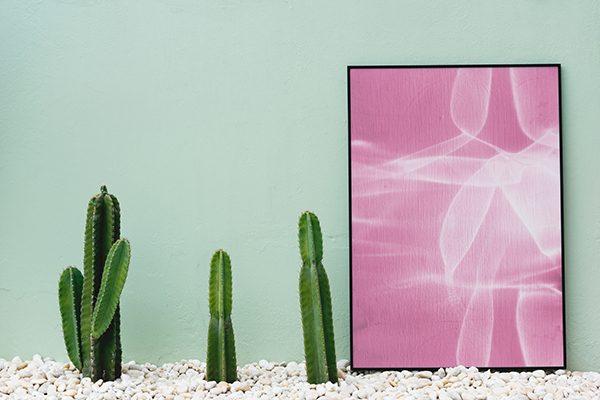 cactus decoración color