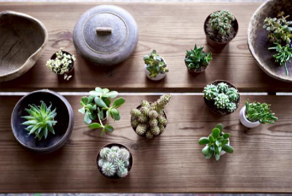 Cactus Ikea plantas terraza