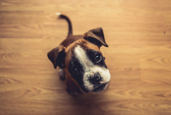 tu mascota causa desperfectos en tu piso de alquiler