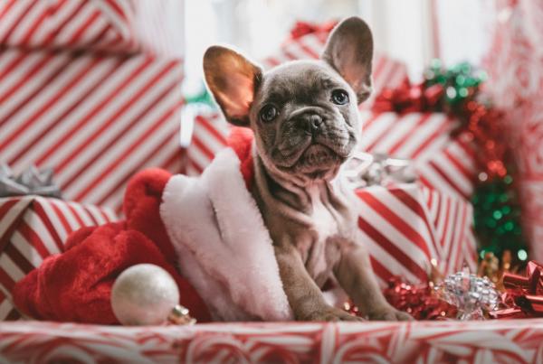 decorar-navidad